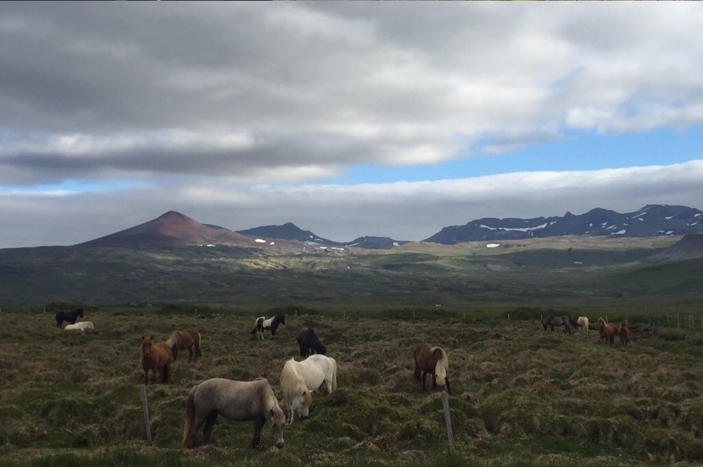 Charlena-Russell-Iceland-horses
